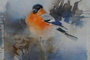 Domherre, Akvarell 76×56