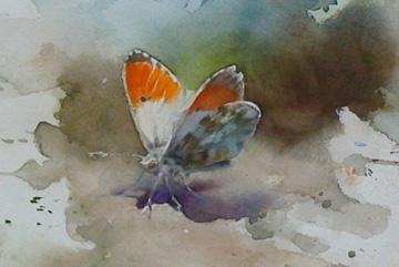 Fjäril 02, Akvarell 20×20