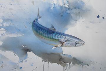 Makrill, Akvarell 56×76