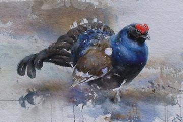 Orre, Akvarell 45×76