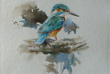 Kungsfiskare, Akvarell 76×56