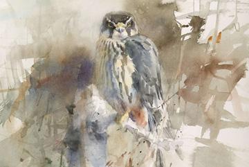Lärkfalk Akvarell 48 x 41