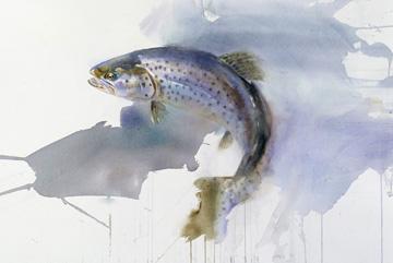 Havsöring Akvarell 57 x 76