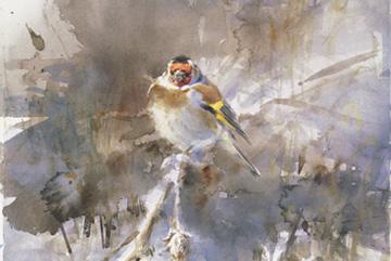 Steglits Akvarell 45 x 35