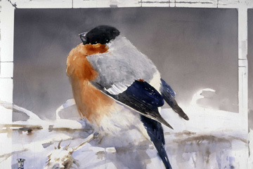 Domherre Akvarell 75 x 105